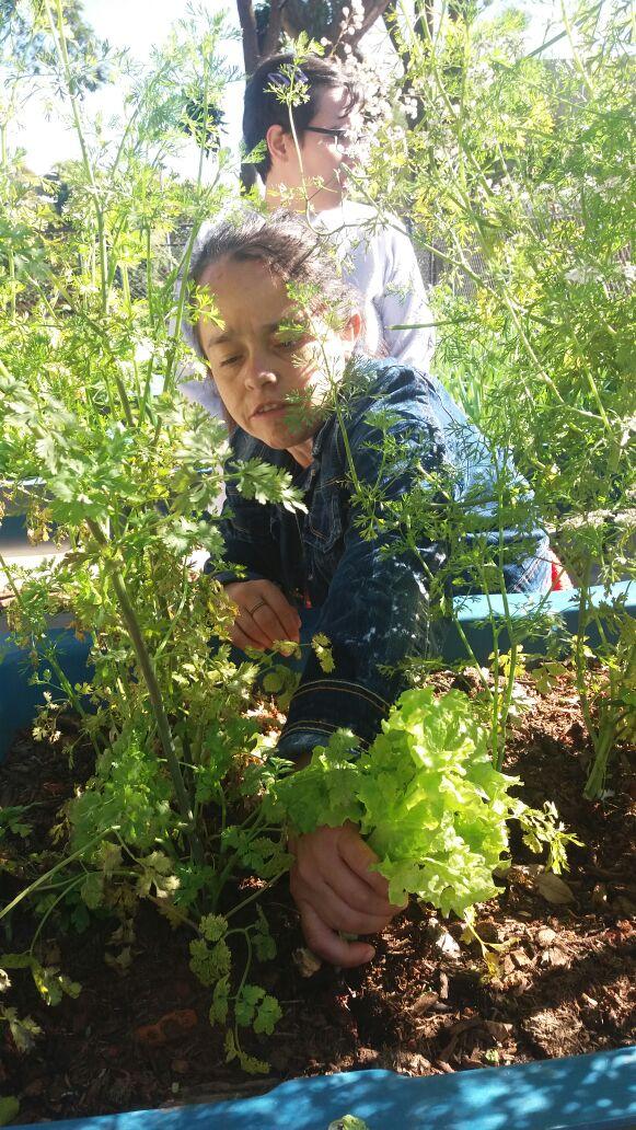 Assistida Odilena trabalhando no cultivo da horta.